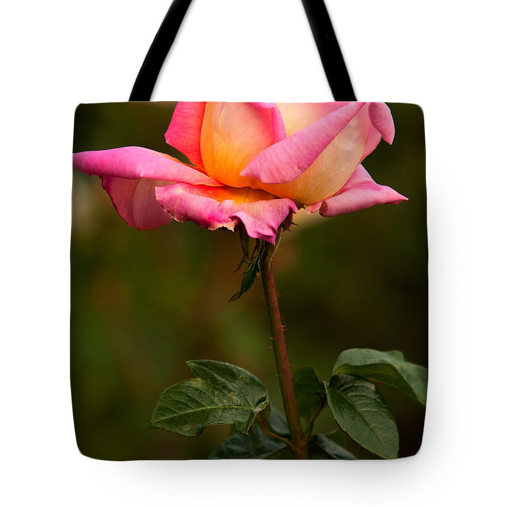 Rose Tote Bag featuring the photograph Rose by Paul Mangold