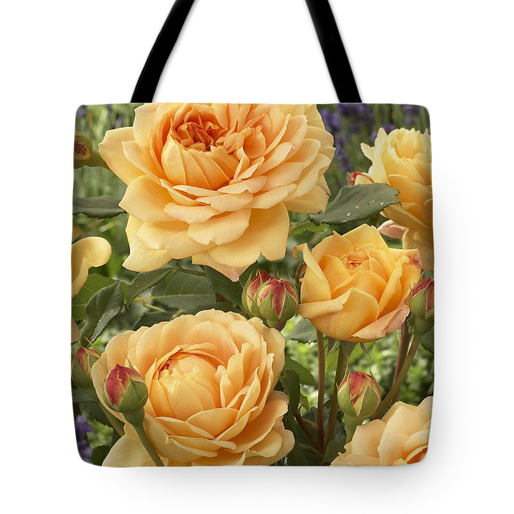 Vp Tote Bag featuring the photograph Rose Rosa Sp Golden Celebration Variety by VisionsPictures