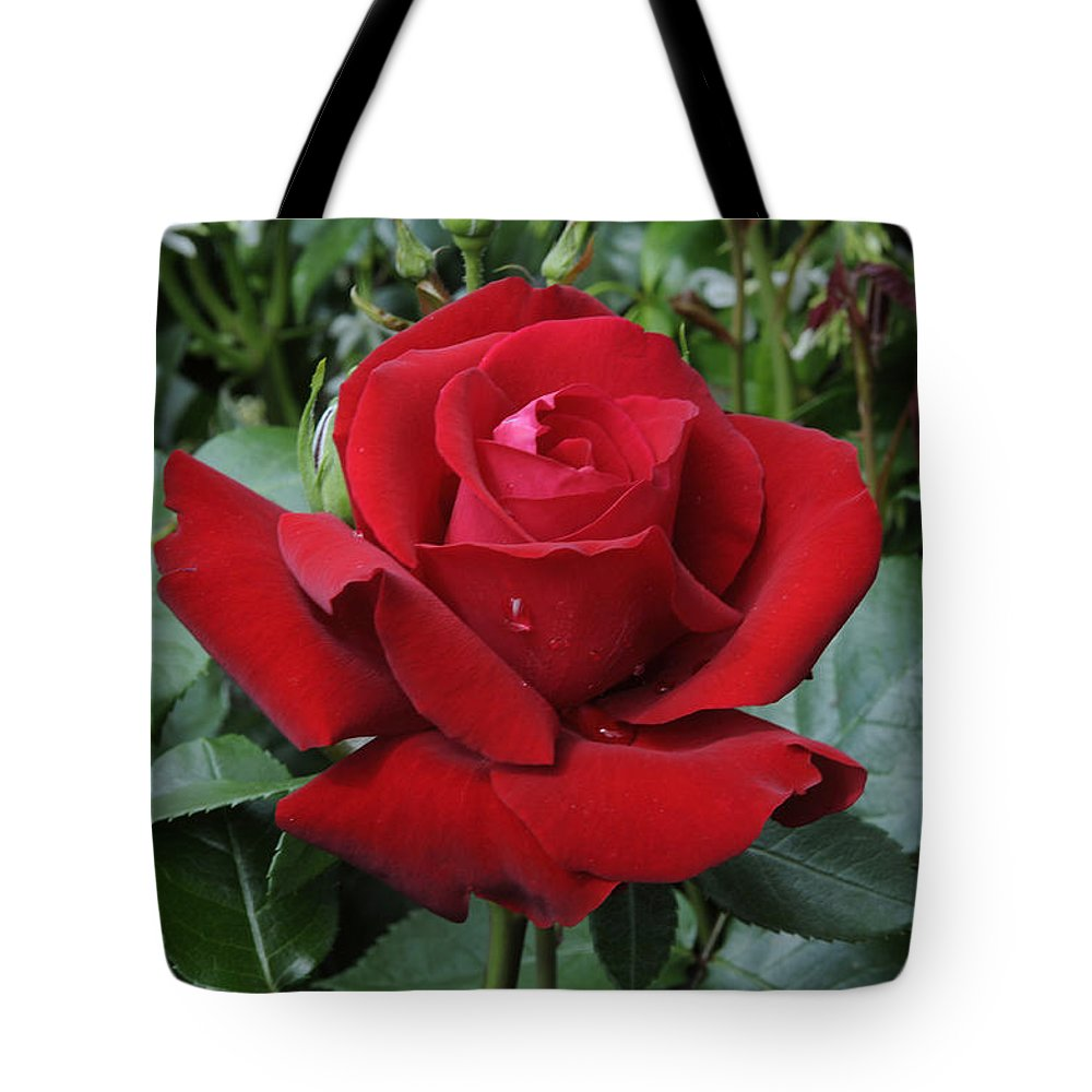 Vp Tote Bag featuring the photograph Rose Rosa Sp Ingrid Bergman Variety by VisionsPictures