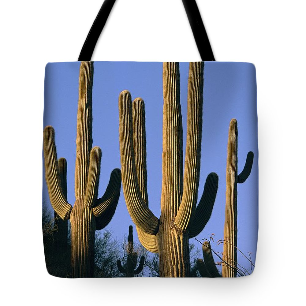North America Tote Bag featuring the photograph Saguaro Cacti In Desert Landscape by Richard Nowitz