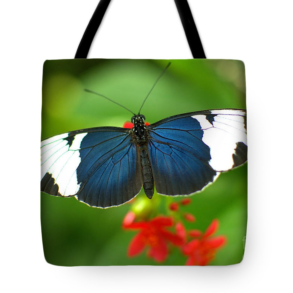 Heliconius Sara Tote Bag featuring the photograph Sara Longwing by Floyd Menezes