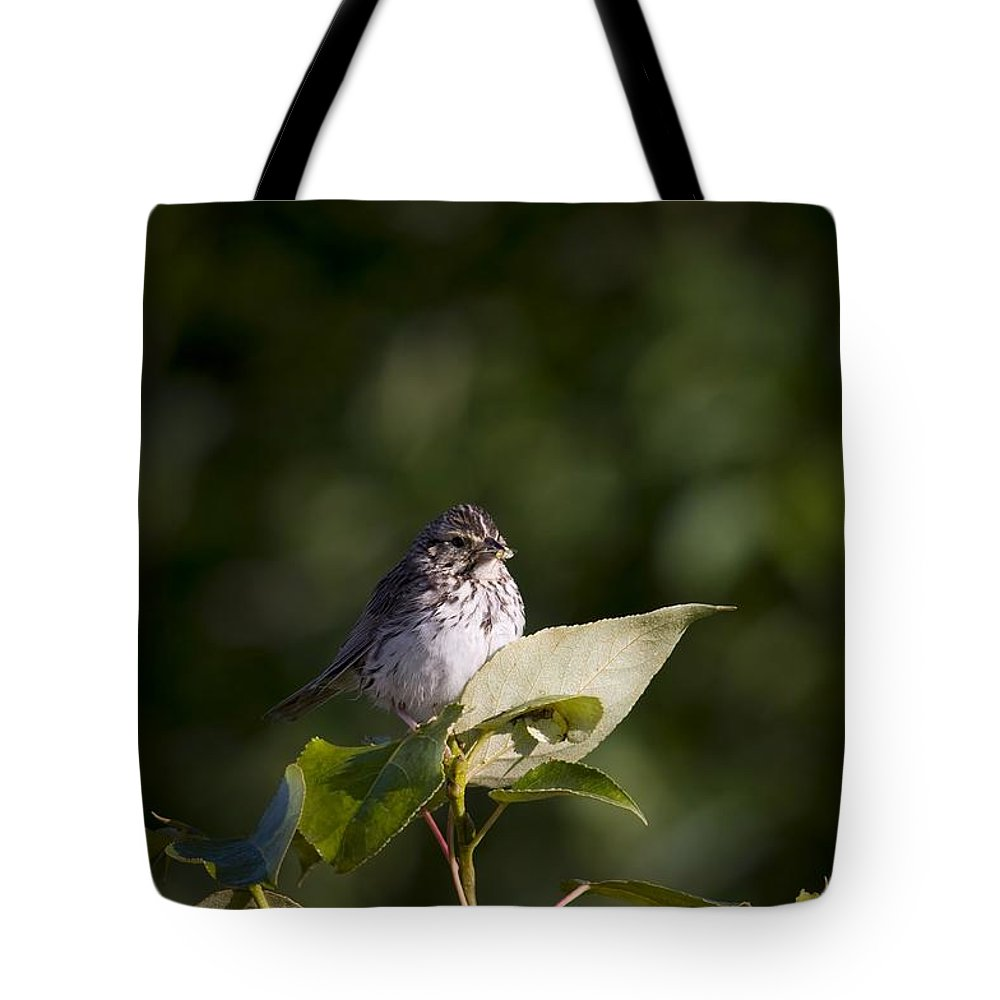 Sparrow Tote Bag featuring the photograph Savannah Sparrow With Spiders by Martin Cooper
