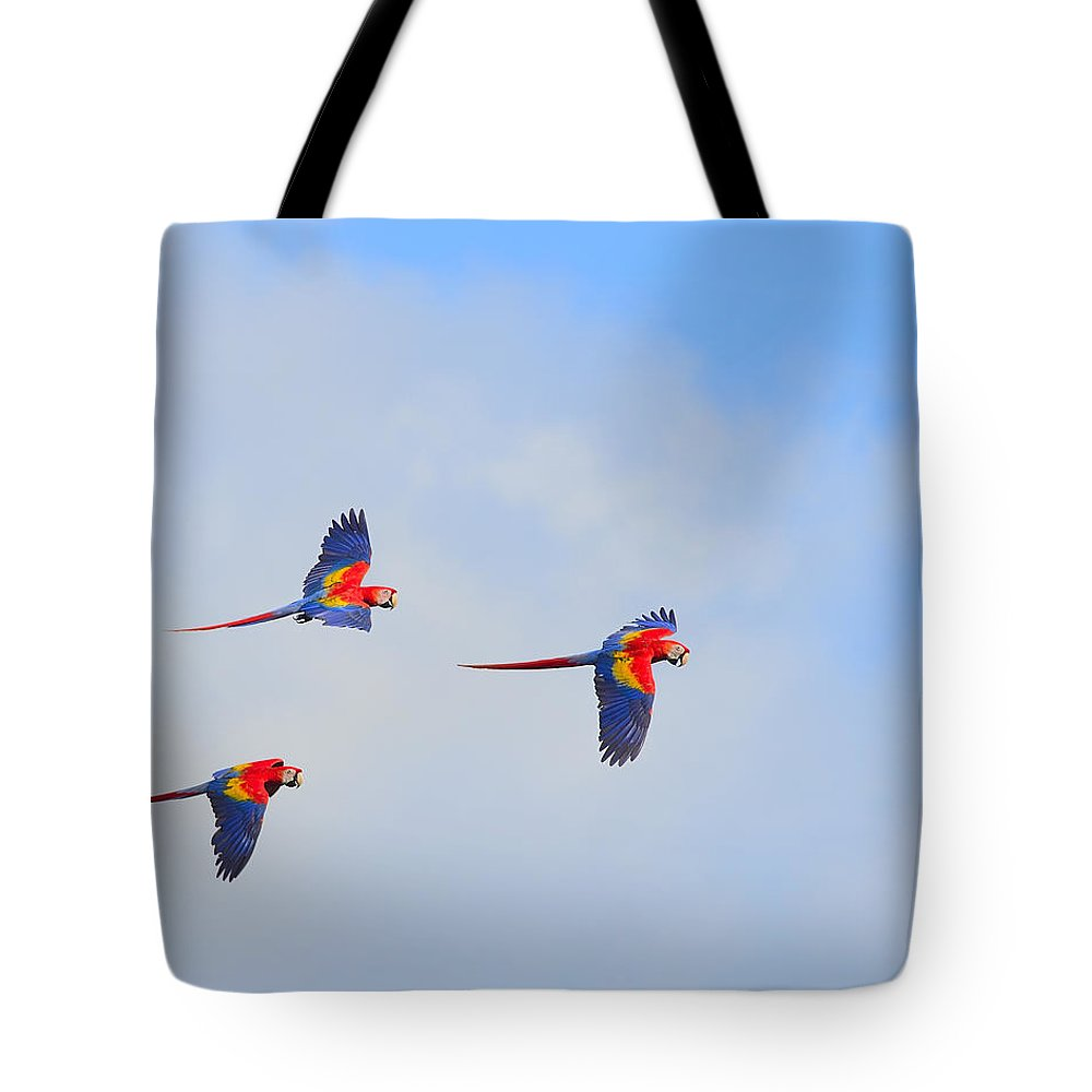 Scarlet Macaw Tote Bag featuring the photograph Scarlet Macaws by Tony Beck