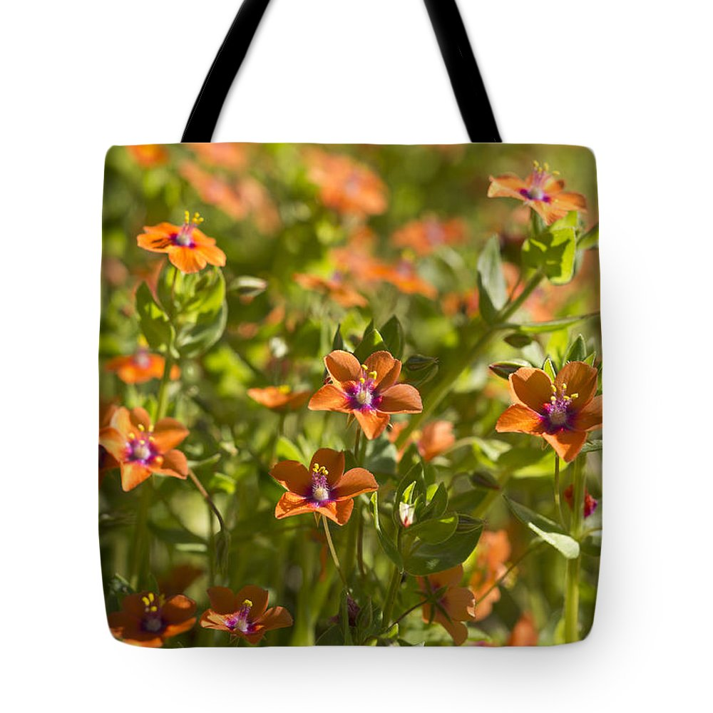 Scarlet Pimpernel Tote Bag featuring the photograph Scarlet Pimpernel by Priya Ghose