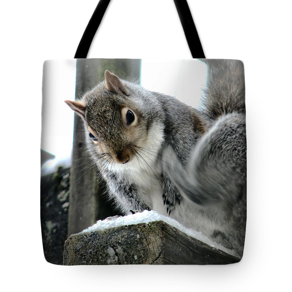 Squirrel Tote Bag featuring the photograph Scratching An Itch by Rory Sagner