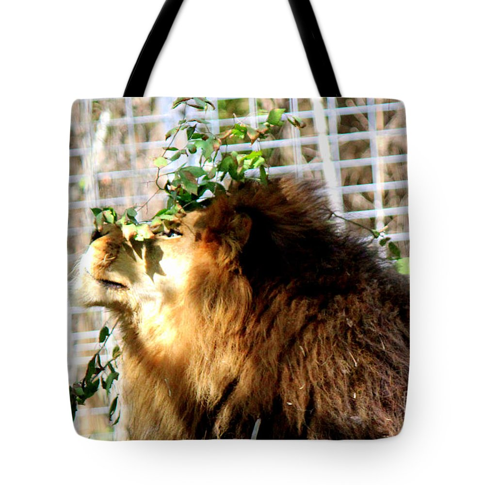 Zoo Animals Tote Bag featuring the photograph Scratching My Nose by Kathy White
