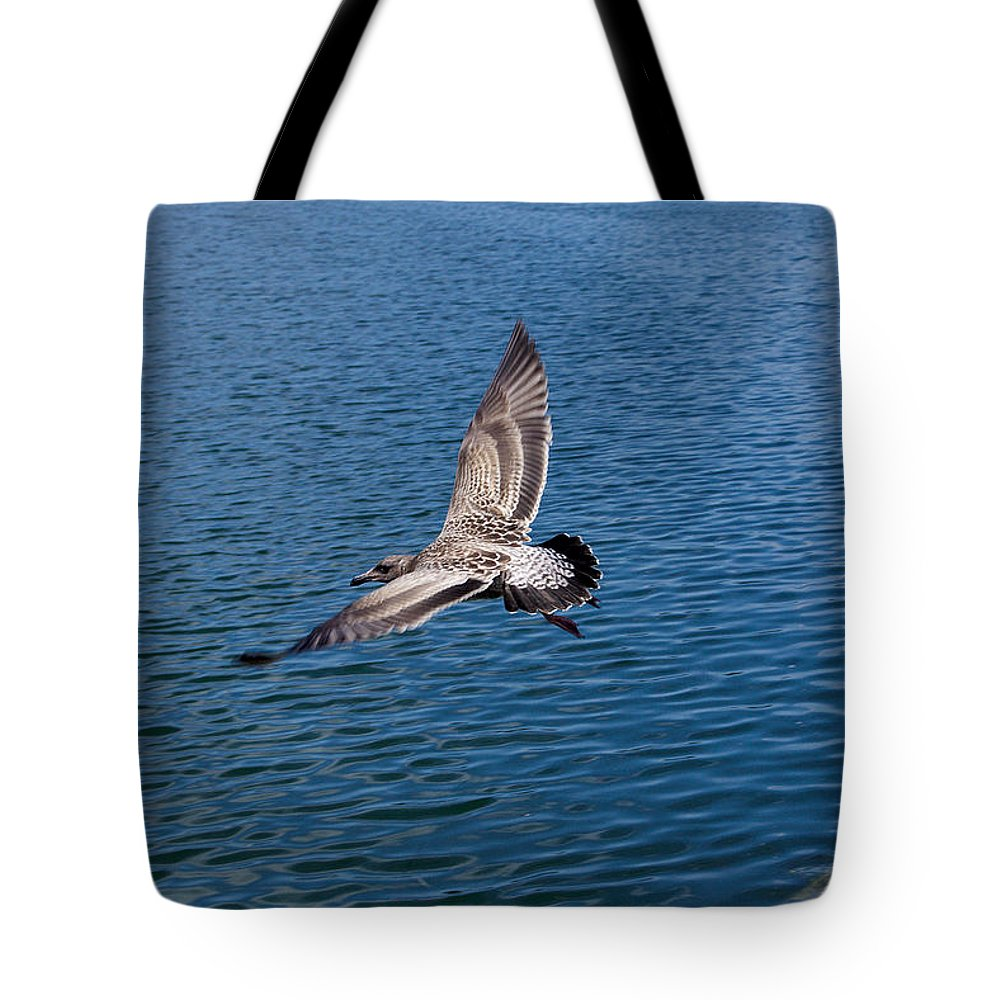 Roy Williams Tote Bag featuring the photograph Seagull In Flight by Roy Williams