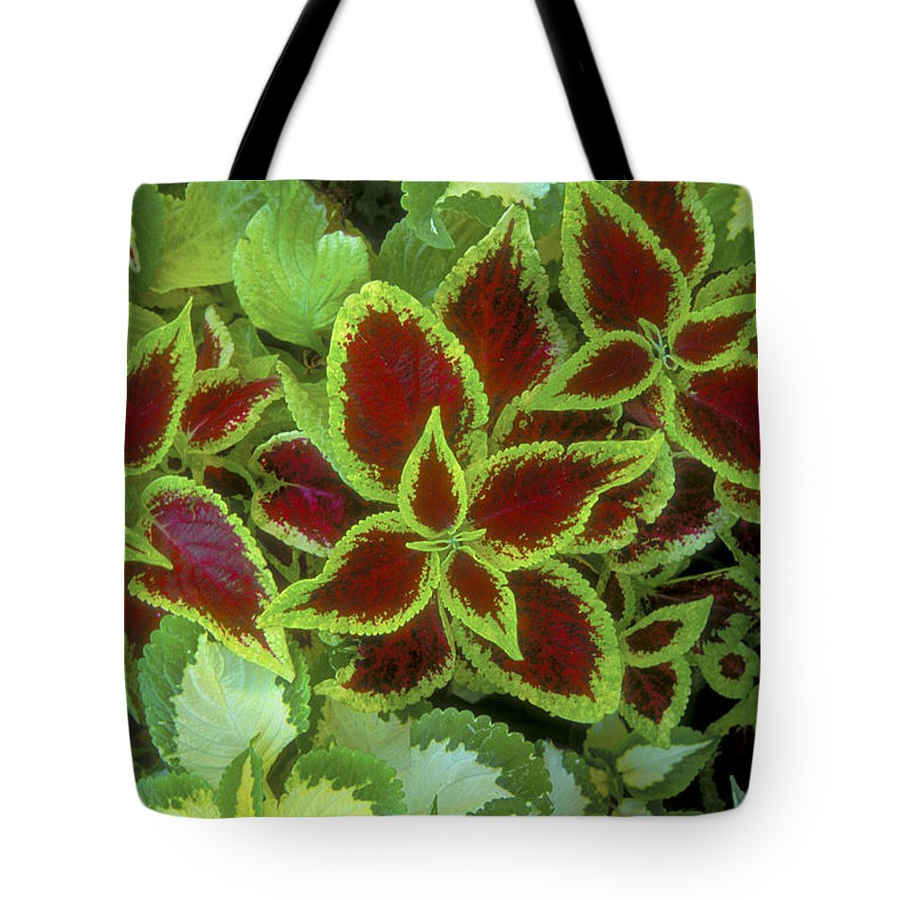 Bronstein Tote Bag featuring the photograph Sedona Floral by Sandra Bronstein