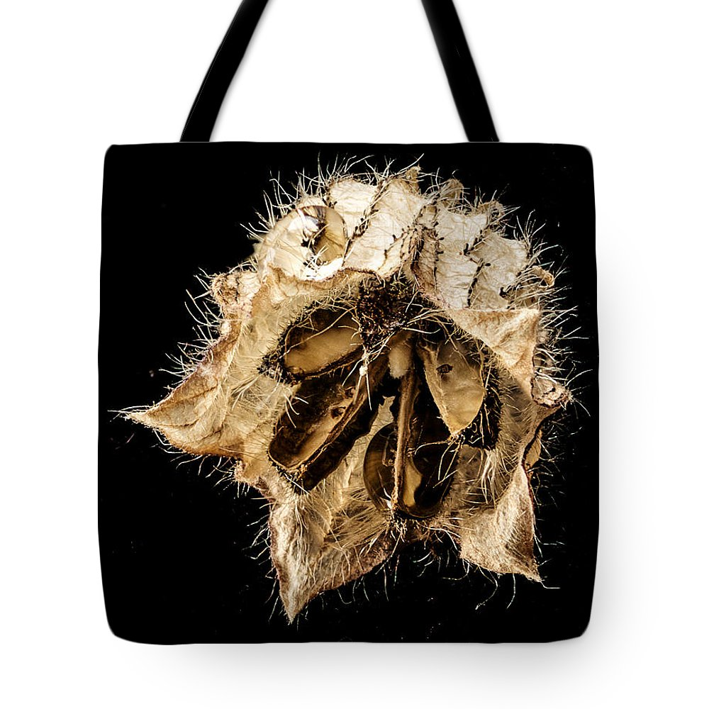Seed Pod Tote Bag featuring the photograph Seed Pod by Jean Noren