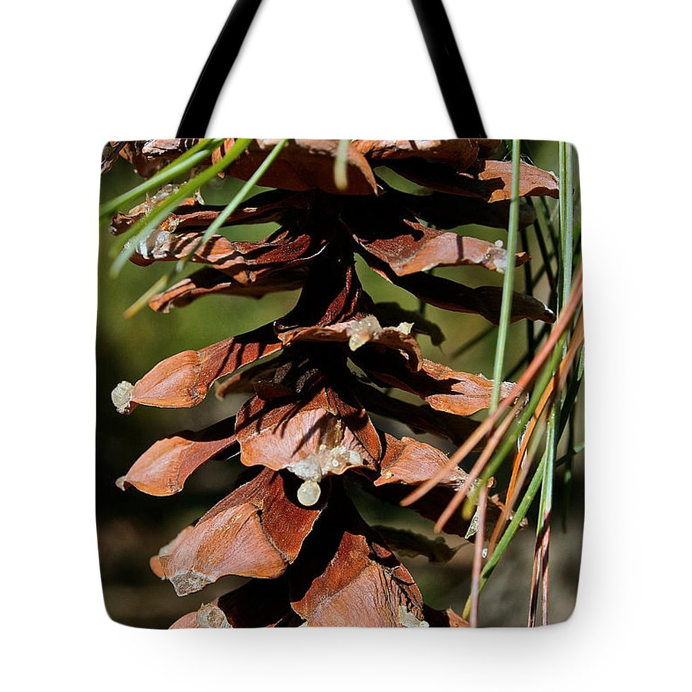 Pine Tree Tote Bag featuring the photograph Seeping Sap by Susan Herber