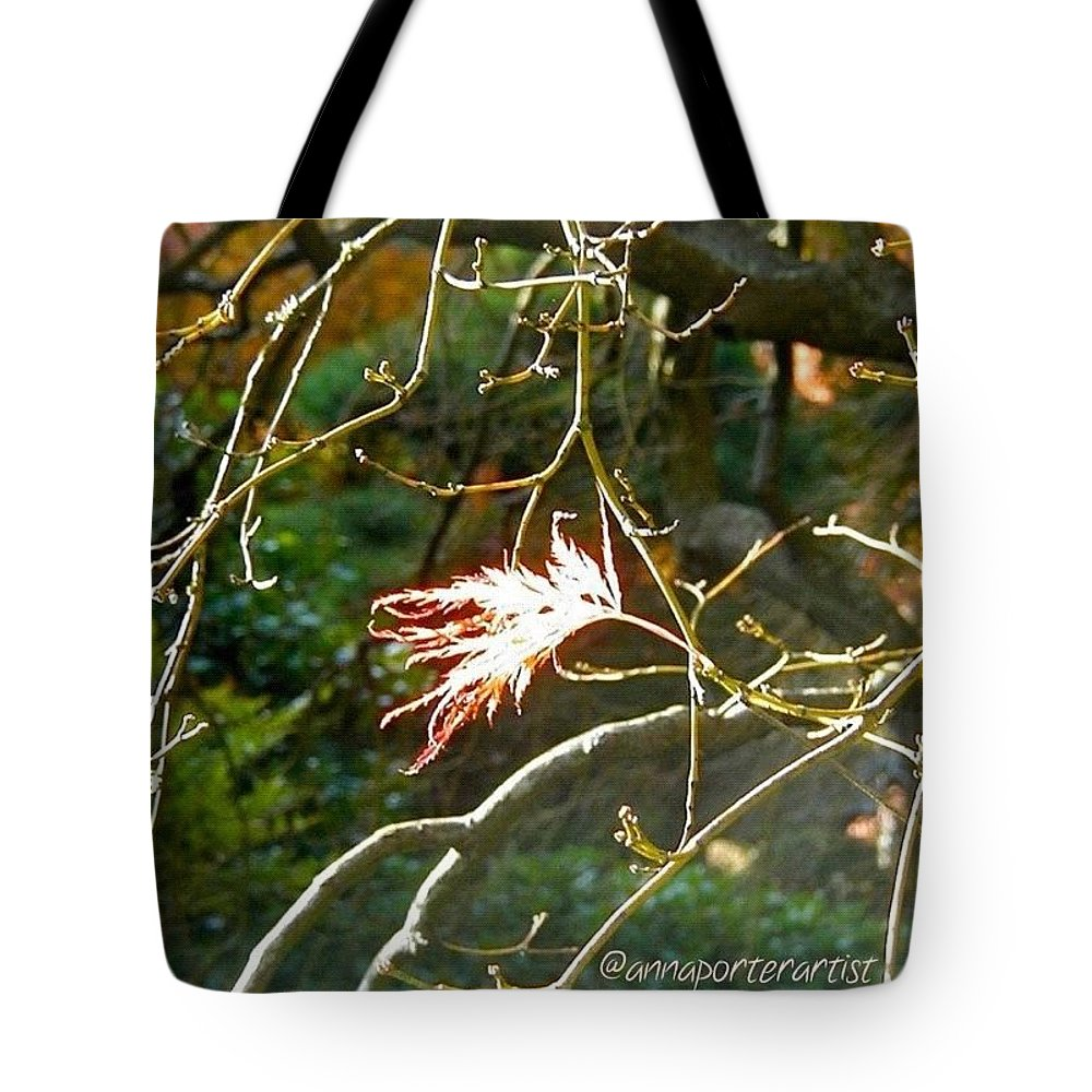 Solo Tote Bag featuring the photograph Solo One Shining Leaf by Anna Porter