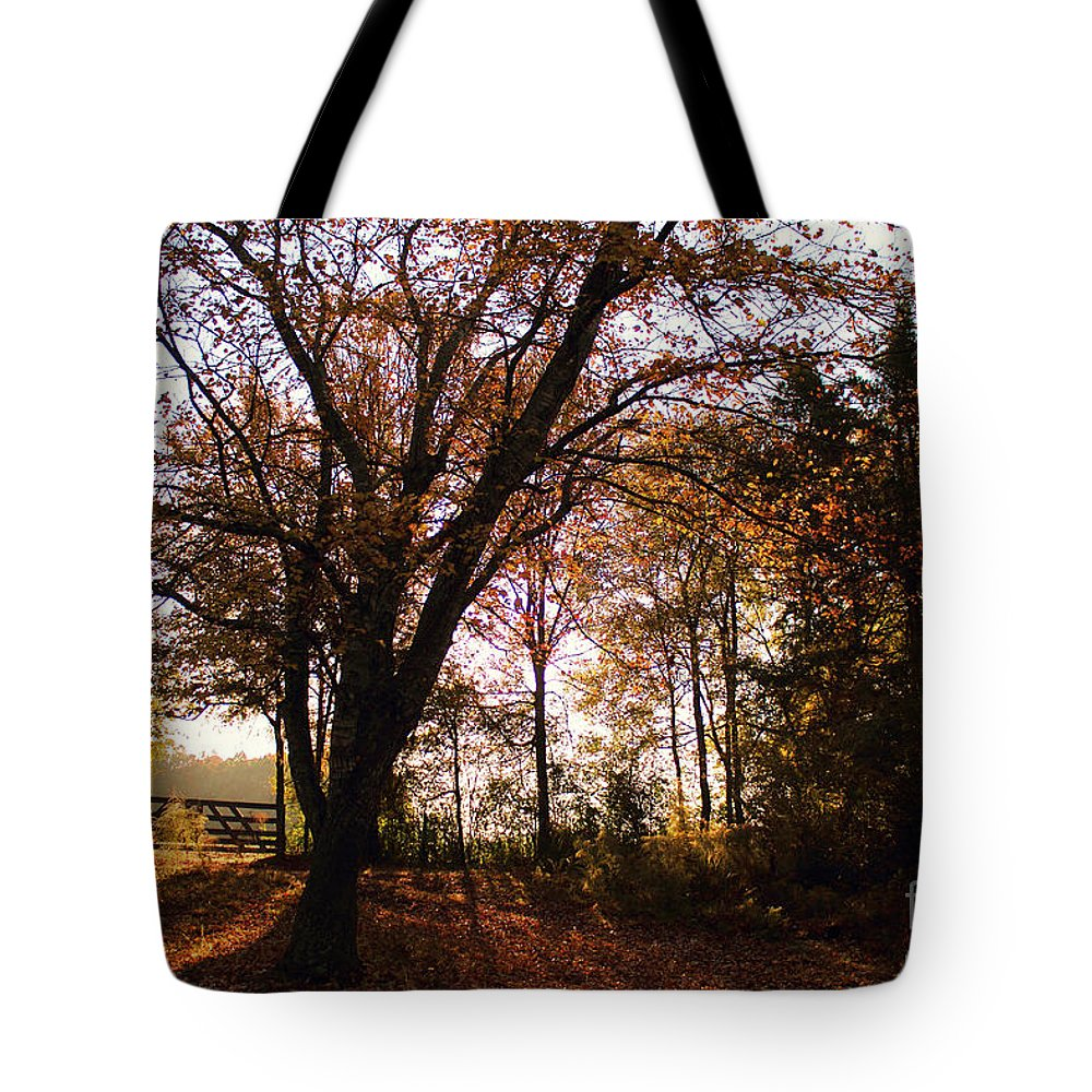 A Gate On Our Property In Mississippi In The Early Hours Of An October Morning. Tote Bag featuring the photograph Shadowgate by Joey Wilder