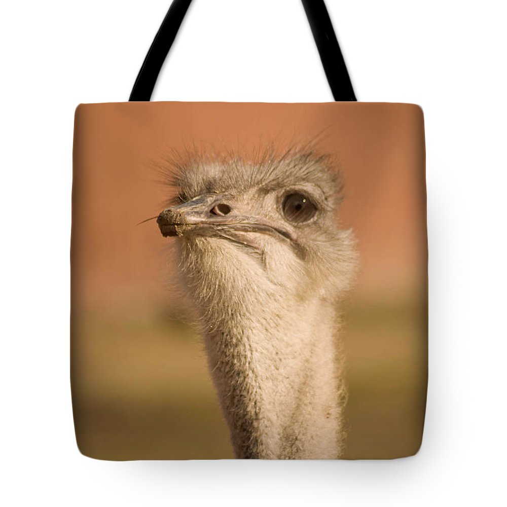 Ostrich Tote Bag featuring the photograph Shaking My Head by Trish Tritz
