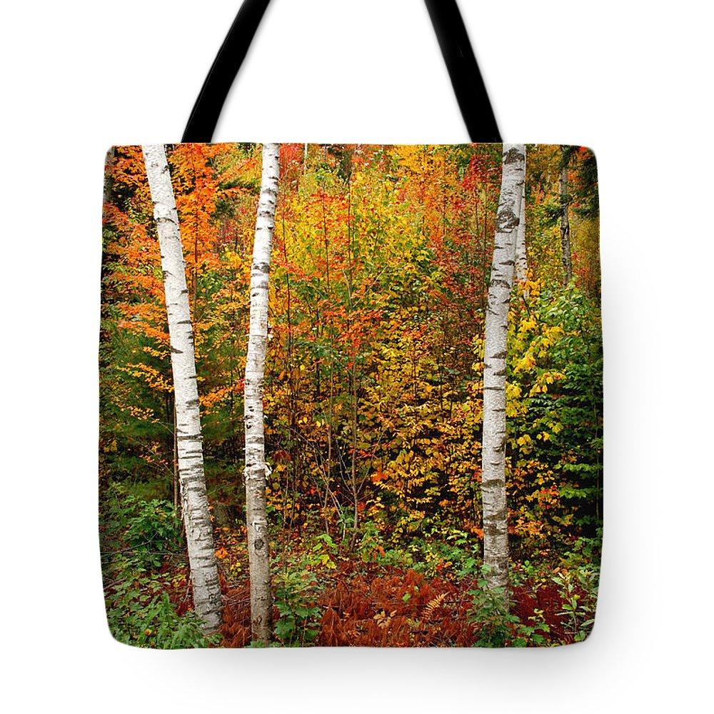 Birches Tote Bag featuring the photograph Shelburne Birches 2 by Nancy De Flon