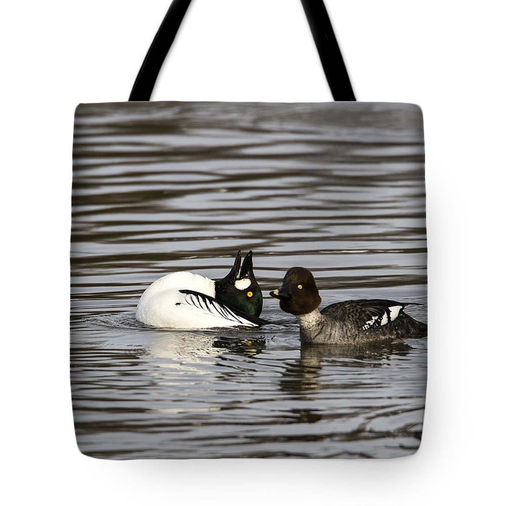 Doug Lloyd Tote Bag featuring the photograph Showing Off by Doug Lloyd