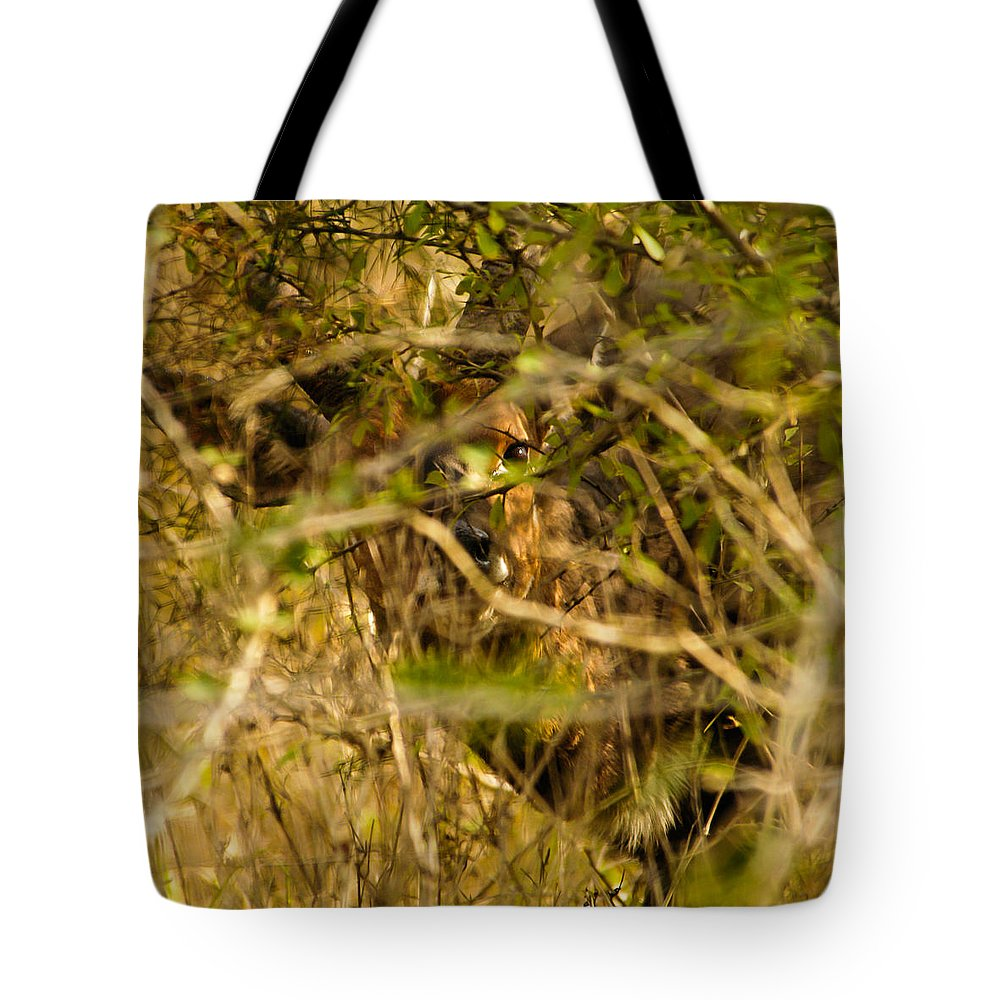 Action Tote Bag featuring the photograph Shy One by Alistair Lyne