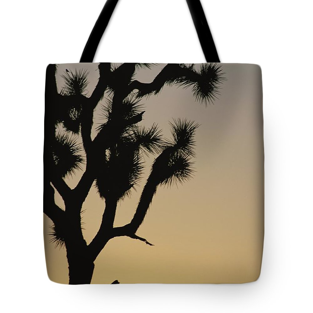 North America Tote Bag featuring the photograph Silhouetted Joshua Tree In Antelope by Marc Moritsch