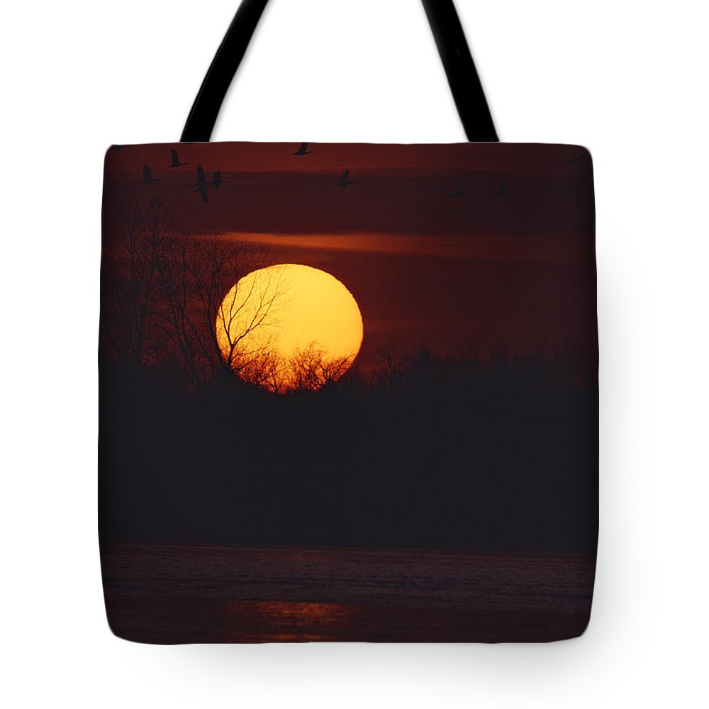United States Of America Tote Bag featuring the photograph Silhouetted Sandhill Cranes Fly by Tom Murphy