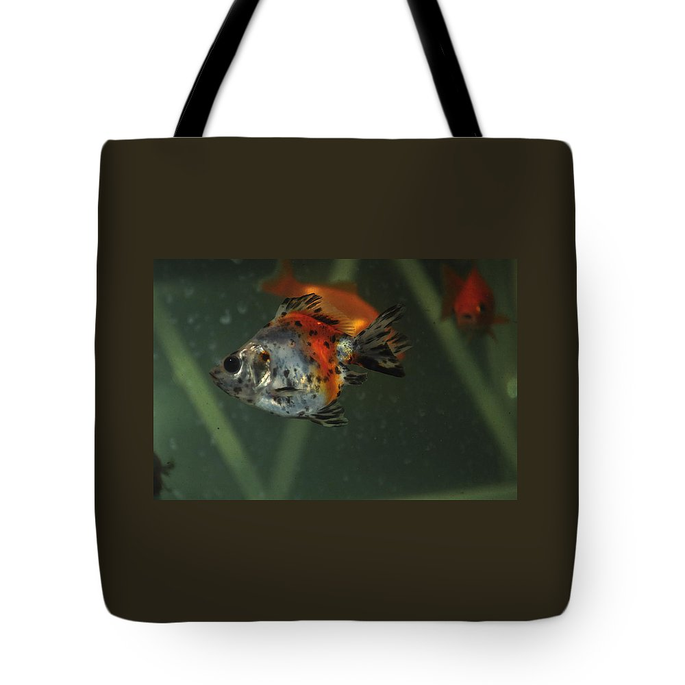 Fish Tote Bag featuring the photograph Silver Goldfish by Catherine Conroy