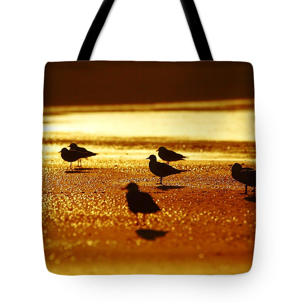 Silver Gull Tote Bag featuring the photograph Silver Gulls On Golden Beach by Andrew McInnes