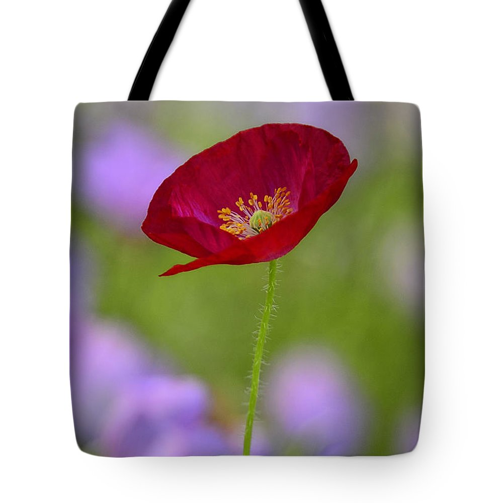 Red Poppy Tote Bag featuring the photograph Single Red Poppy by Saija Lehtonen