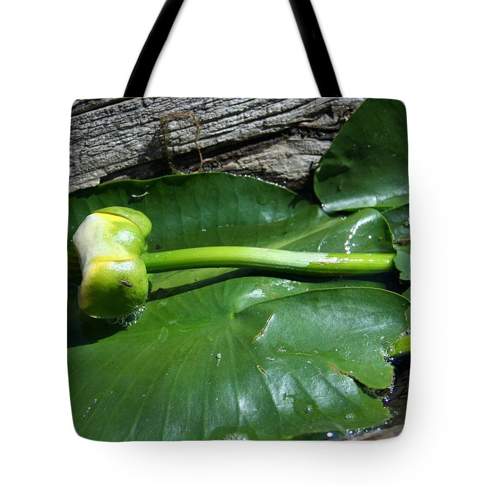 Tote Bag featuring the photograph Sleeping Lily by Joi Electa