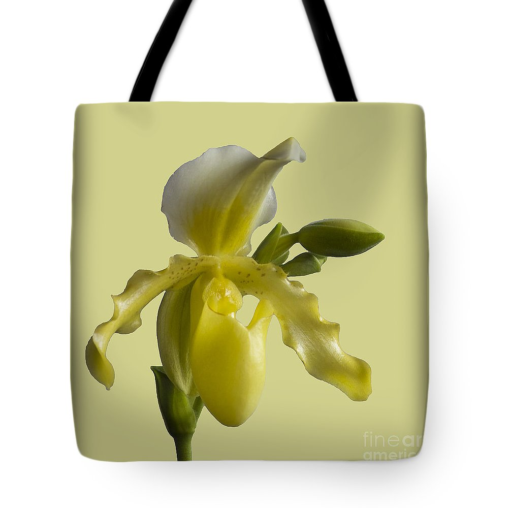 Orchid Tote Bag featuring the photograph Slipper Orchid by Heiko Koehrer-Wagner