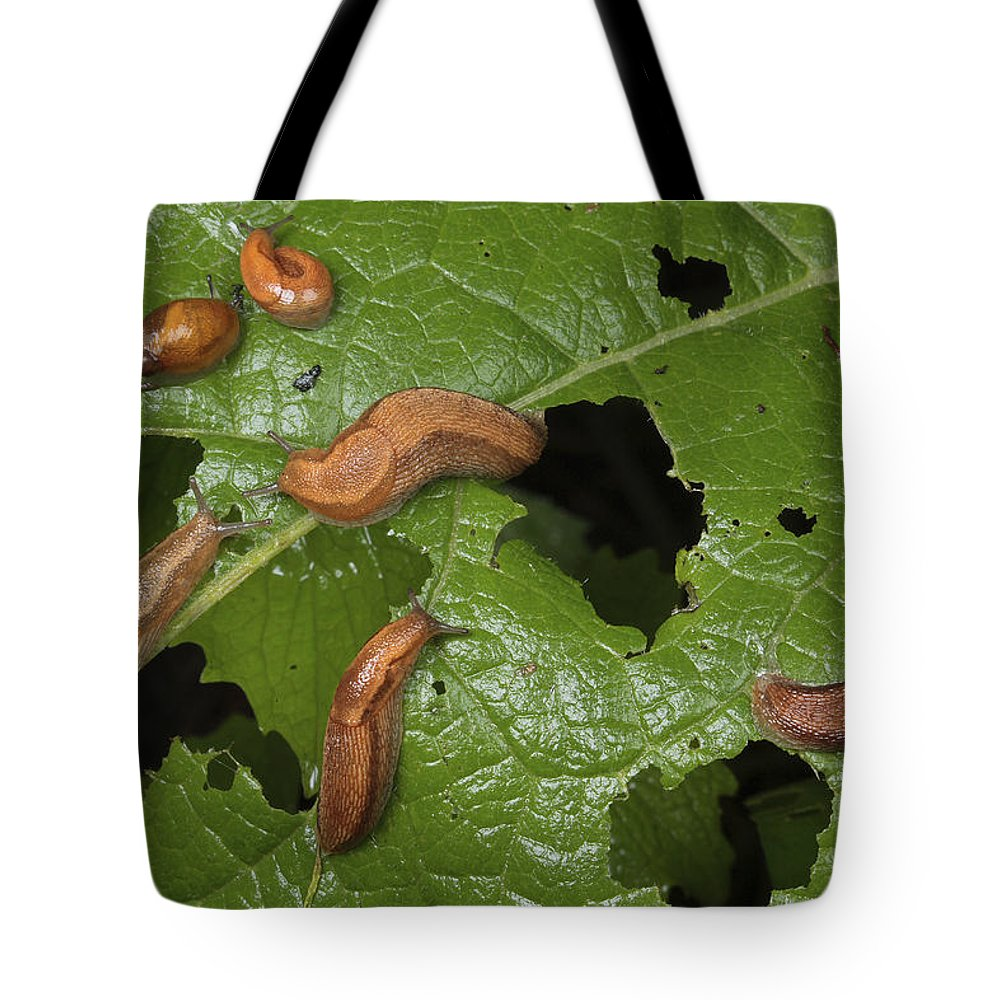 Frederick Maryland Tote Bag featuring the photograph Slugs And A Snail Are Feeding On Leaves by George Grall