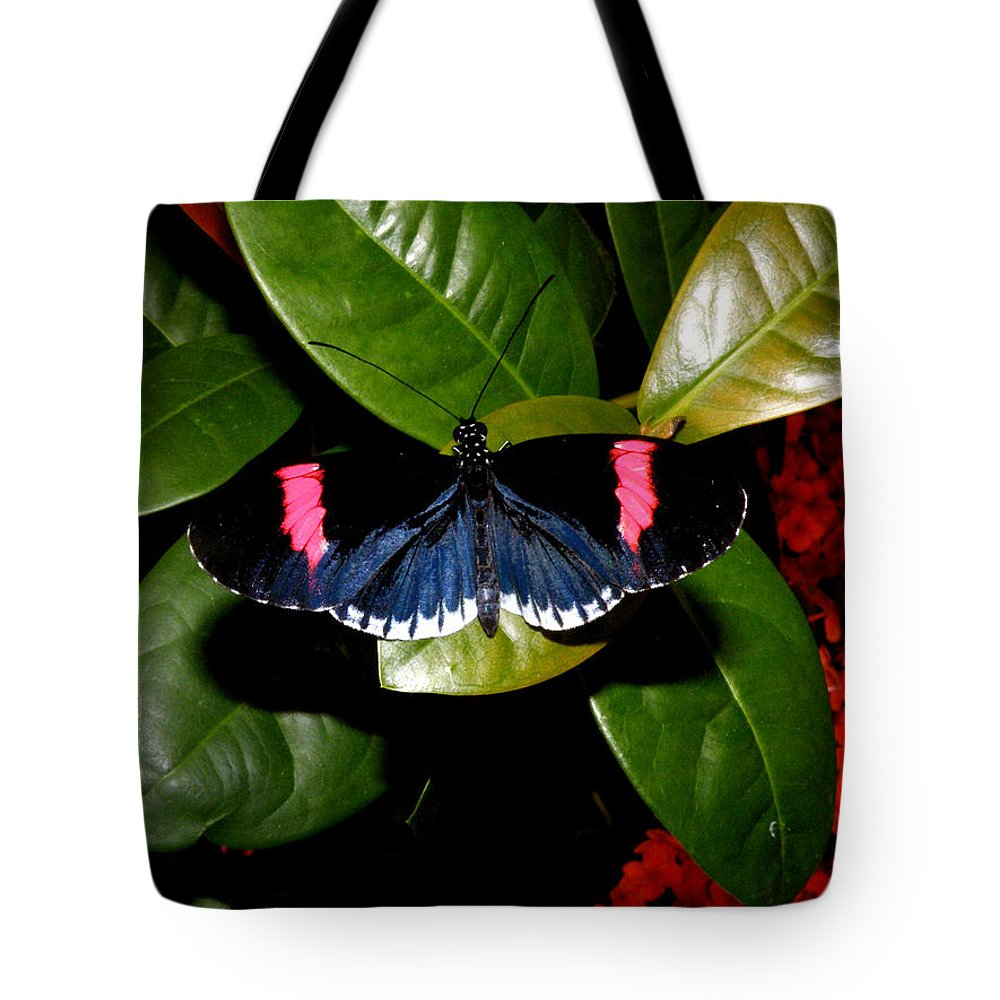 Big Tote Bag featuring the photograph Small Postman Butterfly by Kimmary MacLean