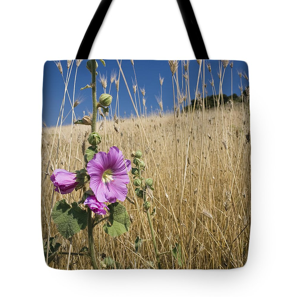 Mp Tote Bag featuring the photograph Smaller Tree-mallow Lavatera Cretica by Konrad Wothe