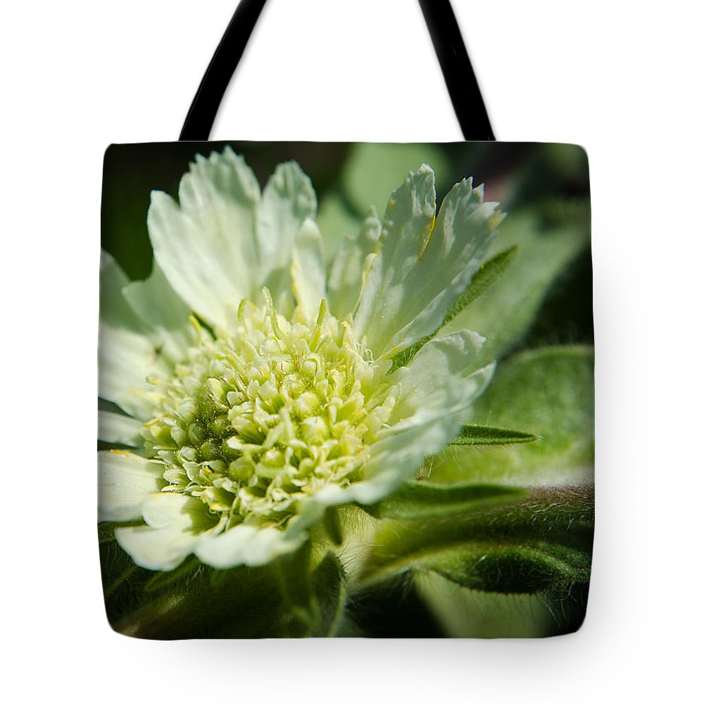 Backgrounds Tote Bag featuring the photograph Snail And Wildflower by Michael Goyberg