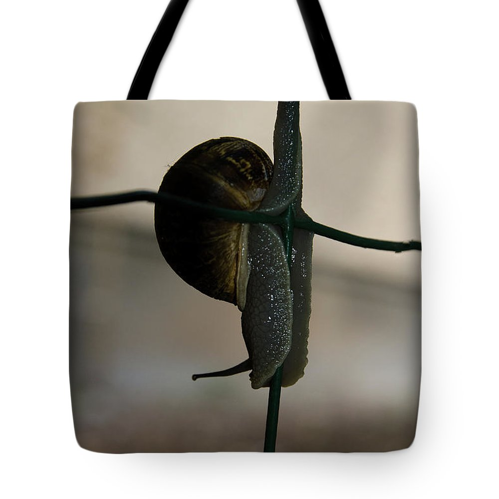 Helicidae Tote Bag featuring the photograph Snail On The Fence by Michael Goyberg