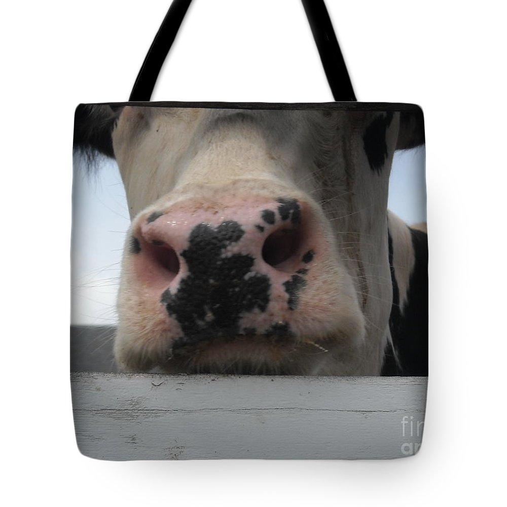 Black And White Dairy Cow Tote Bag featuring the photograph Sniffing Cow by Michelle Welles