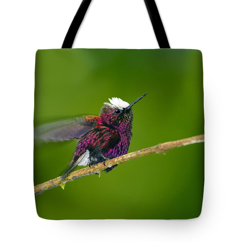 Snowcap Tote Bag featuring the photograph Snowcap by Tony Beck