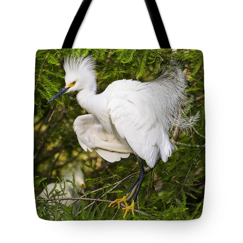 Snowy Egret Tote Bag featuring the photograph Snowy Egret In Breeding Plumage by Bill Swindaman