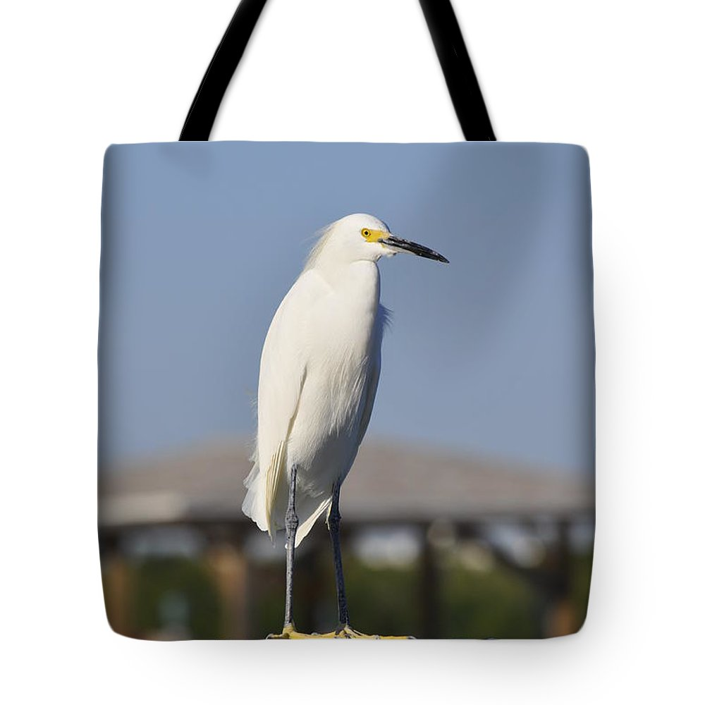 Snowy Egret Tote Bag featuring the photograph Snowy Egret Stare Down by Christine Stonebridge