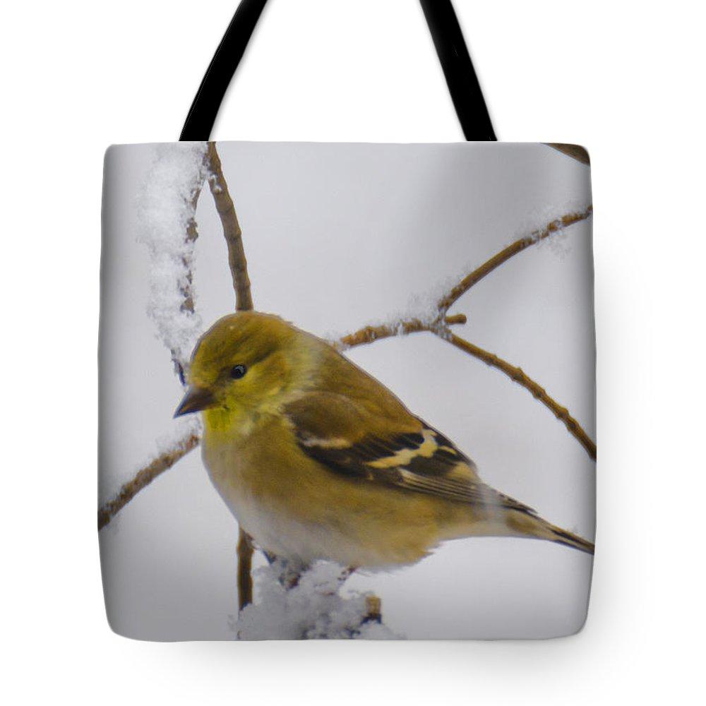 Usa Tote Bag featuring the photograph Snowy Yellow Finch by LeeAnn McLaneGoetz McLaneGoetzStudioLLCcom