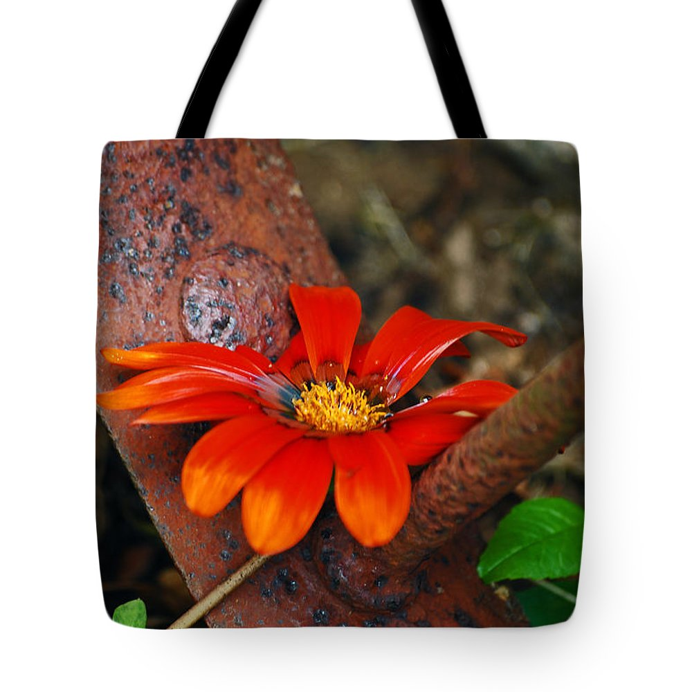 Daisy Tote Bag featuring the photograph Something Old And Something New by Lori Tambakis