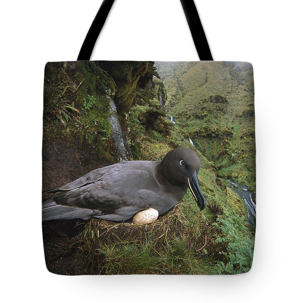 Color Image Tote Bag featuring the photograph Sooty Albatross Phoebetria Fusca by Tui De Roy