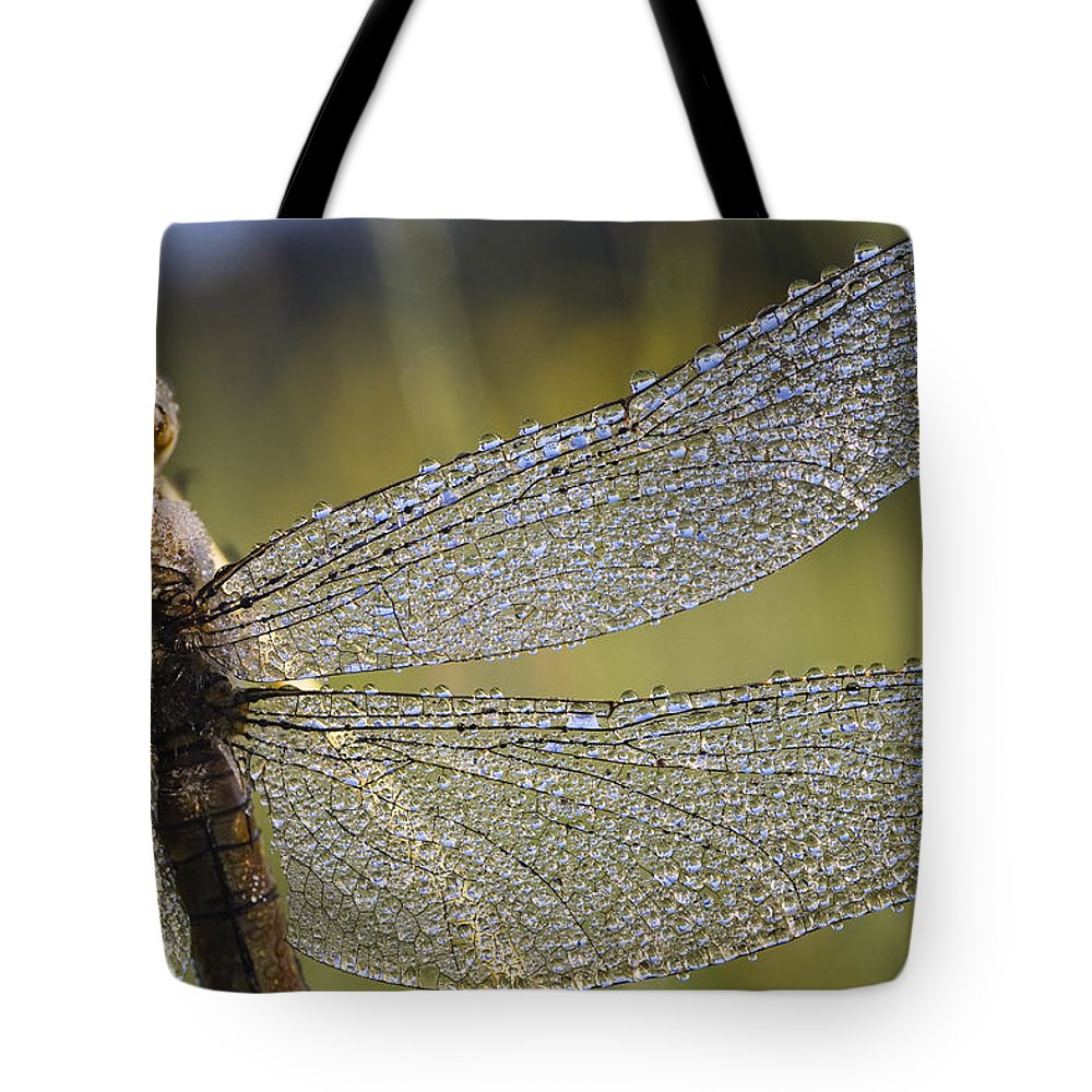 Mp Tote Bag featuring the photograph Southern Skimmer Orthetrum Brunneum by Konrad Wothe