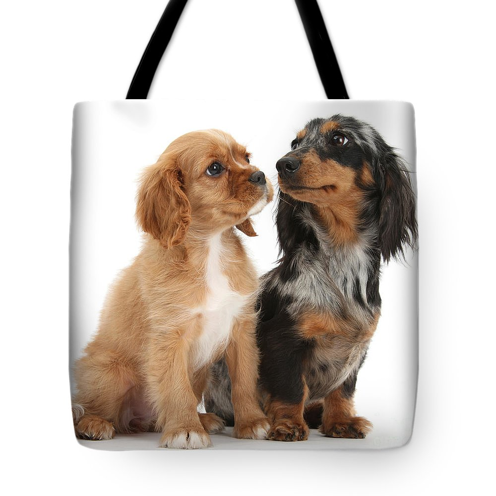 Spaniel Puppy And Full-grown Dachshund Tote Bag for Sale by Mark Taylor