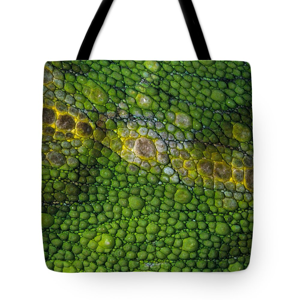 Fn Tote Bag featuring the photograph Spiny Desert Rhinoceros Chameleon by Ingo Arndt