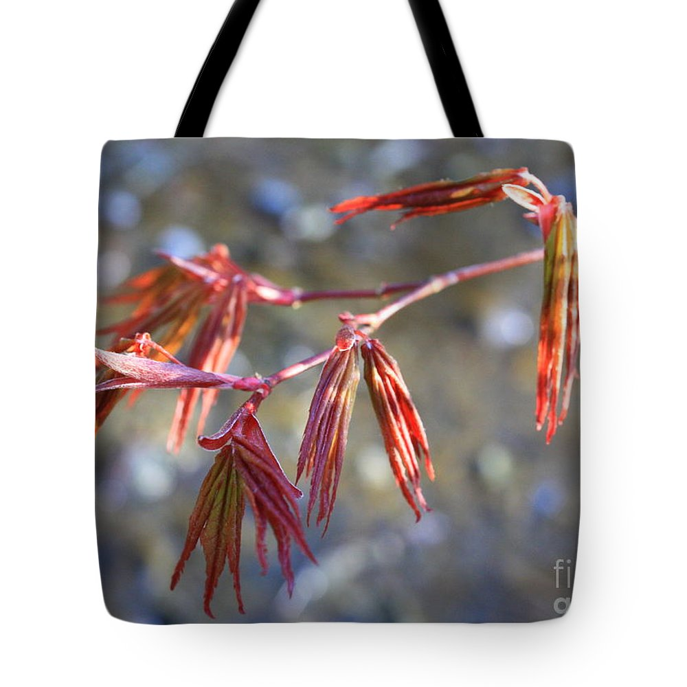 Botanical Tote Bag featuring the photograph Springtime Japanese Maple Leaves by Carol Groenen