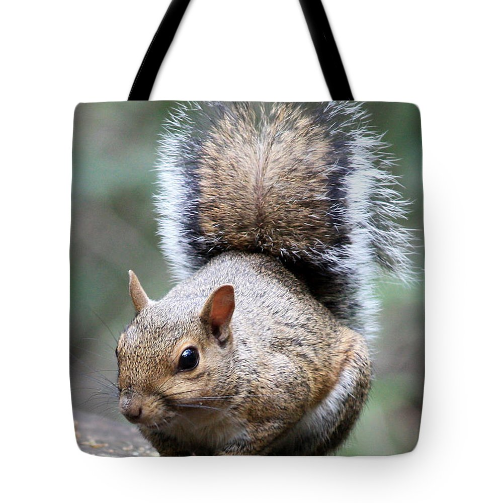 Squirrel Tote Bag featuring the photograph Squirrel by Carol Groenen