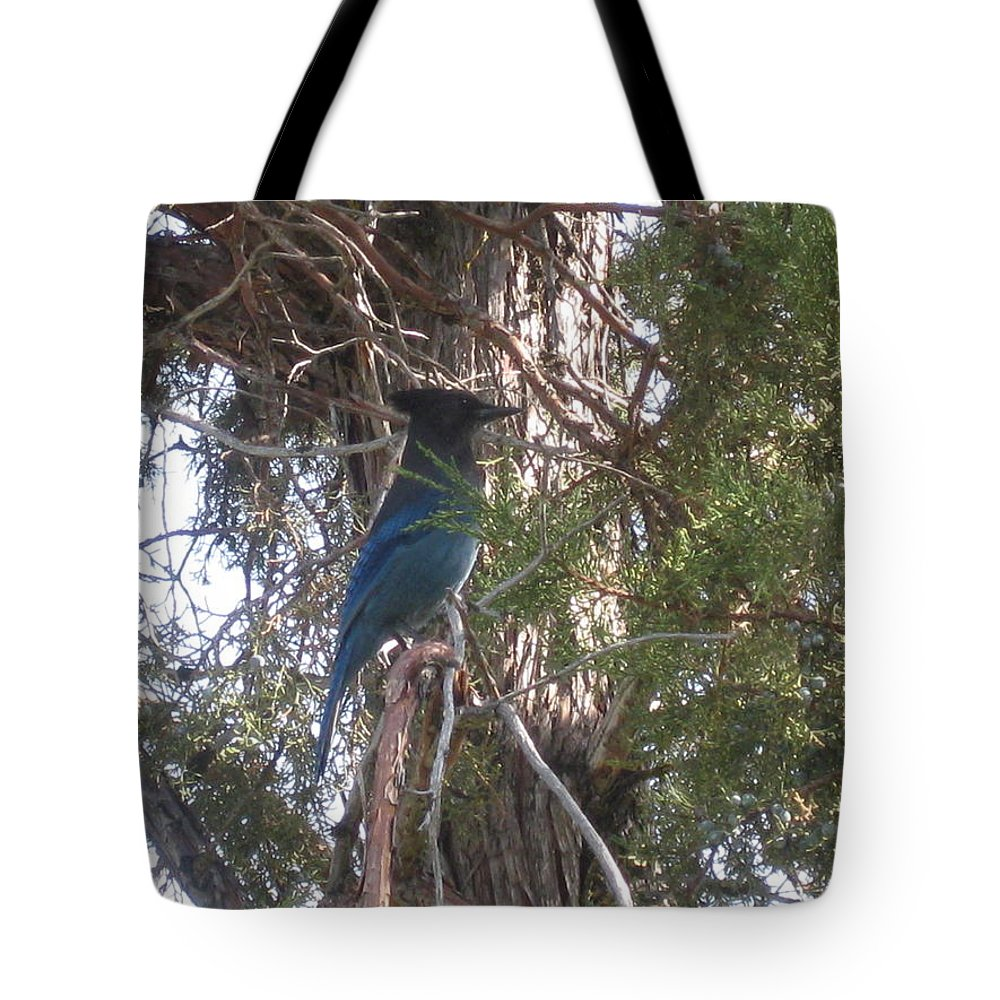 Jay Tote Bag featuring the photograph Steller's Jay by Linda Hutchins