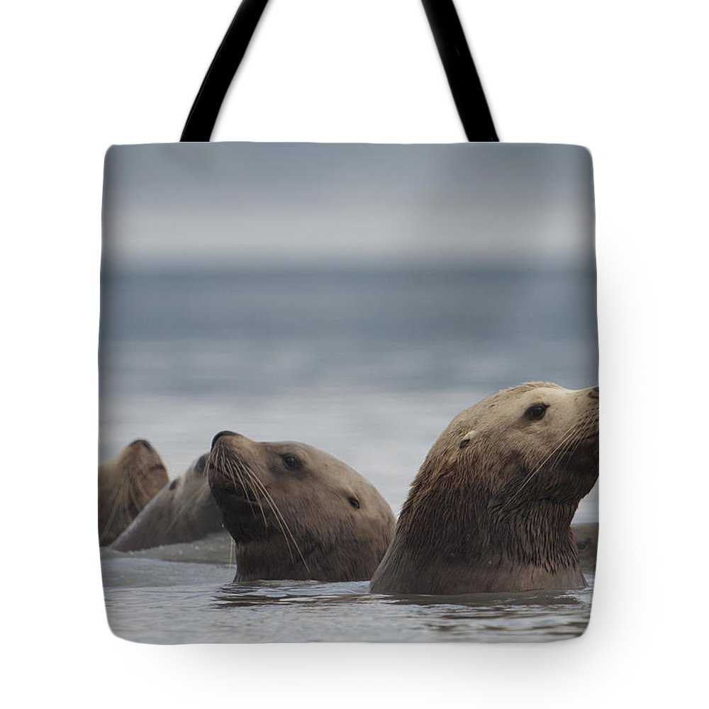 Mp Tote Bag featuring the photograph Stellers Sea Lion Eumetopias Jubatus by Michael Quinton