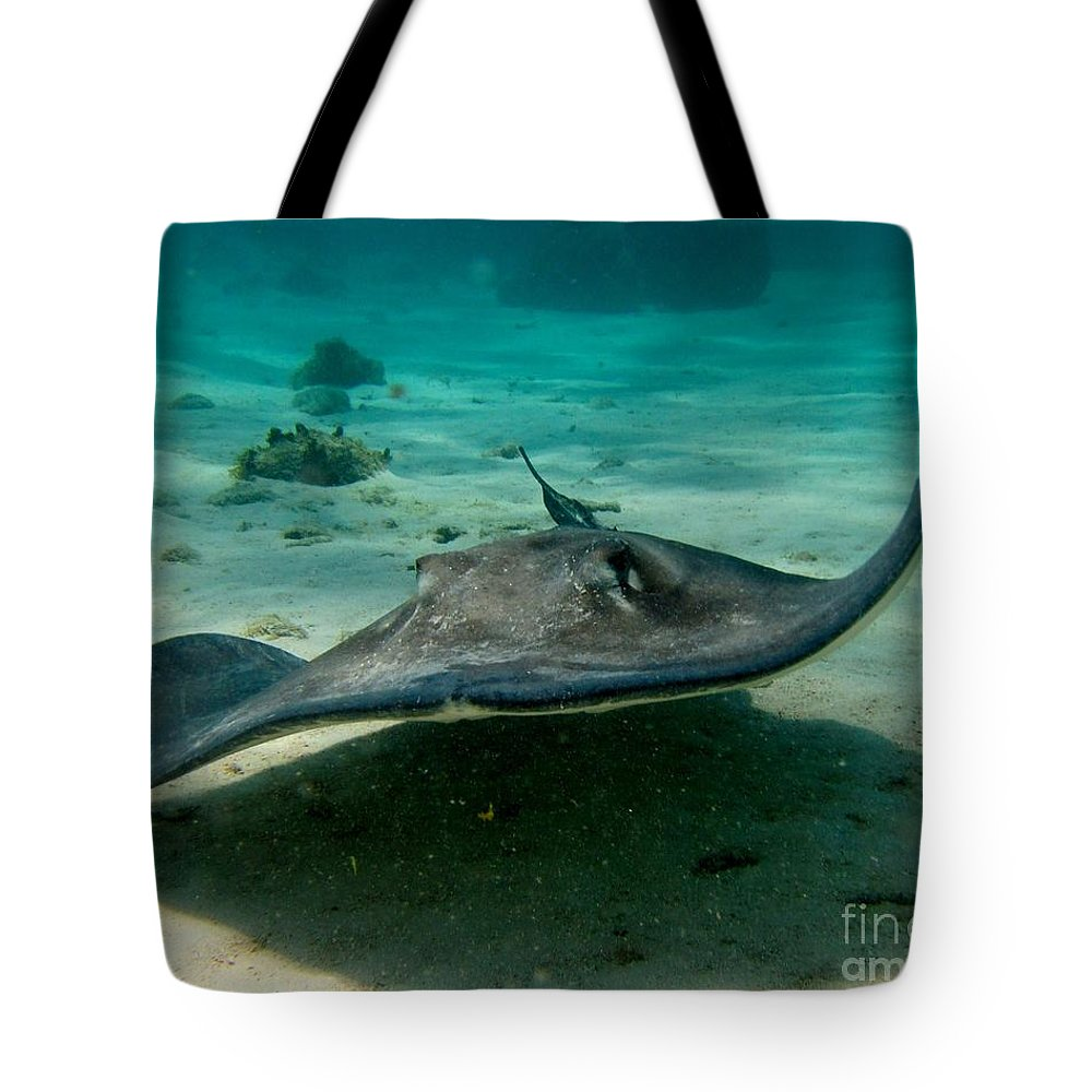 Sting Ray Tote Bag featuring the photograph Stingray Approaching by John Malone