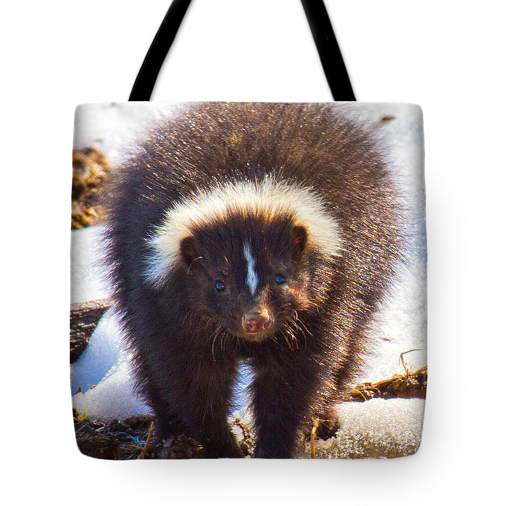 Skunk Tote Bag featuring the photograph Stop Where You Are by Betsy Knapp