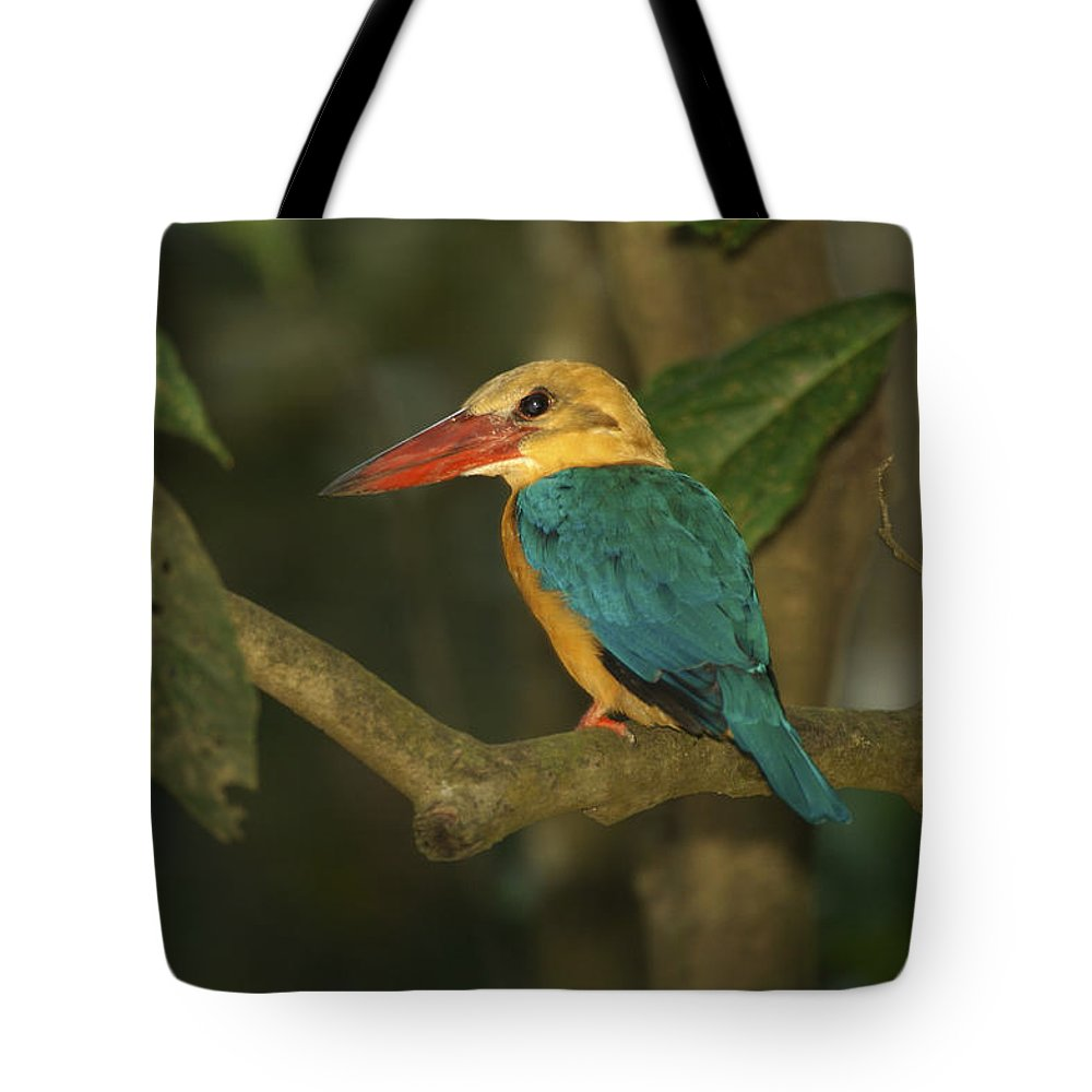 Stork-billed Kingfisher Tote Bag featuring the photograph Stork-billed Kingfisher Perched by Tim Laman