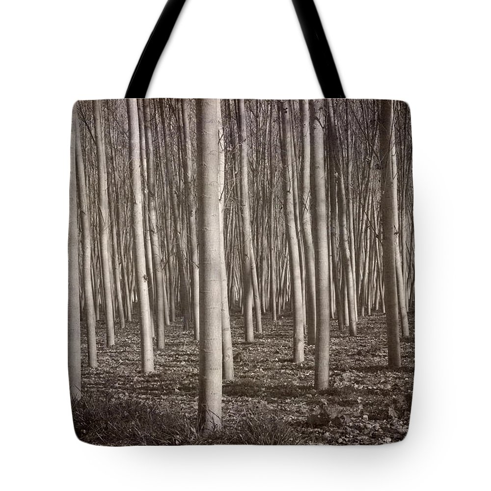 Black And White Tote Bag featuring the photograph Straight Trees by Guido Montanes Castillo